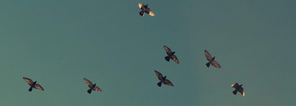 slide_03_birds